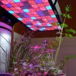 نورپردازی گلخانه (لامپ رشد گیاه)