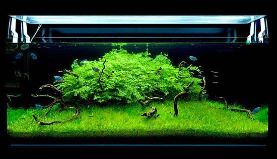 نور پردازی در آکواریوم گیاهی