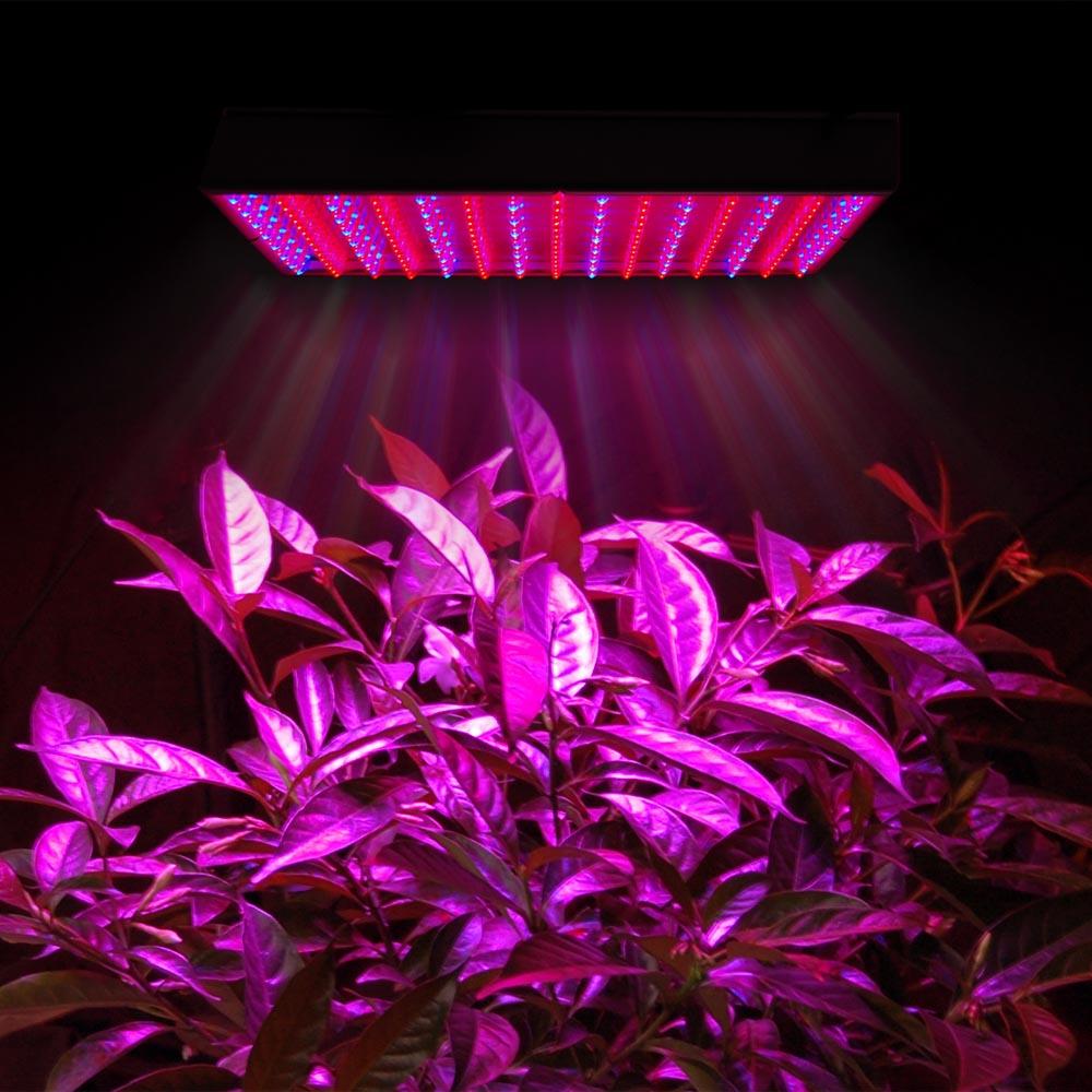 چراغ رشد گیاه