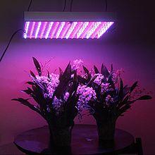 لامپ رشد گیاه ال ای دی
