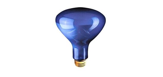 An example of incandescent grow light bulb.