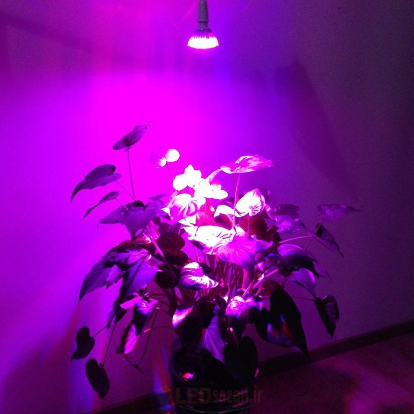 لامپ فتوسنتز