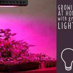 مروری بر انواع لامپ های رشد گیاهان