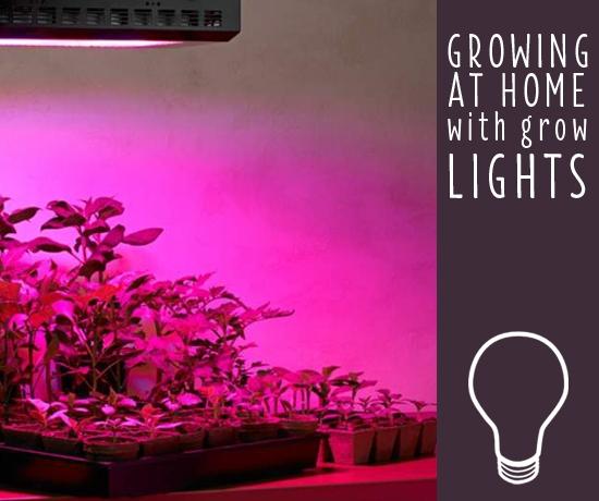 لامپ های رشد گیاهان