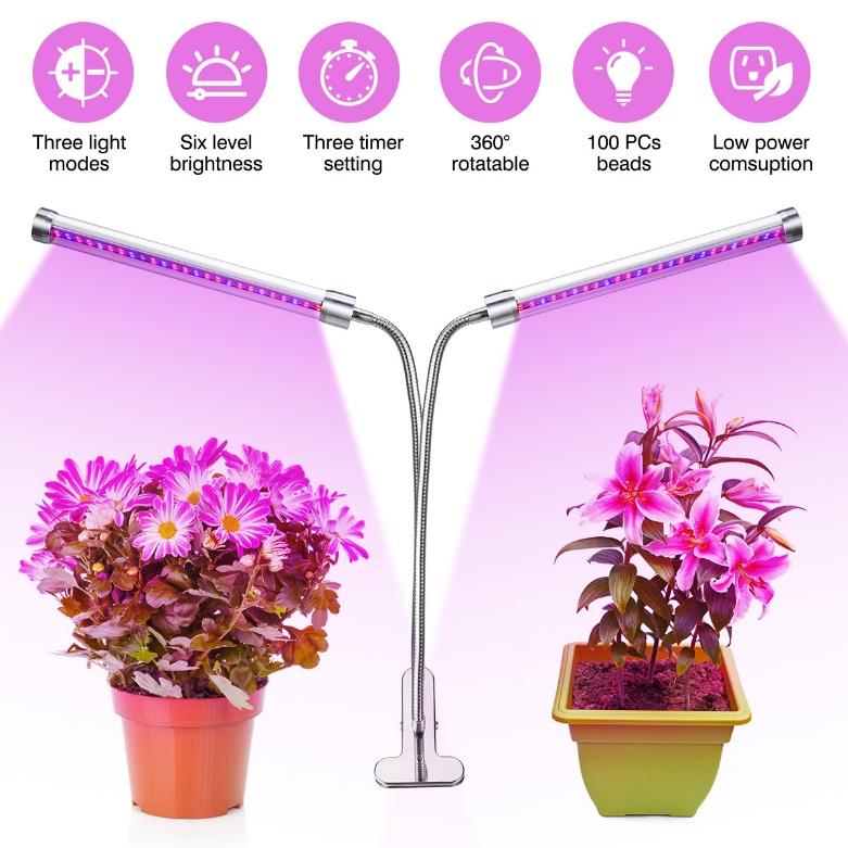لامپ برای رشد گیاه کوچک