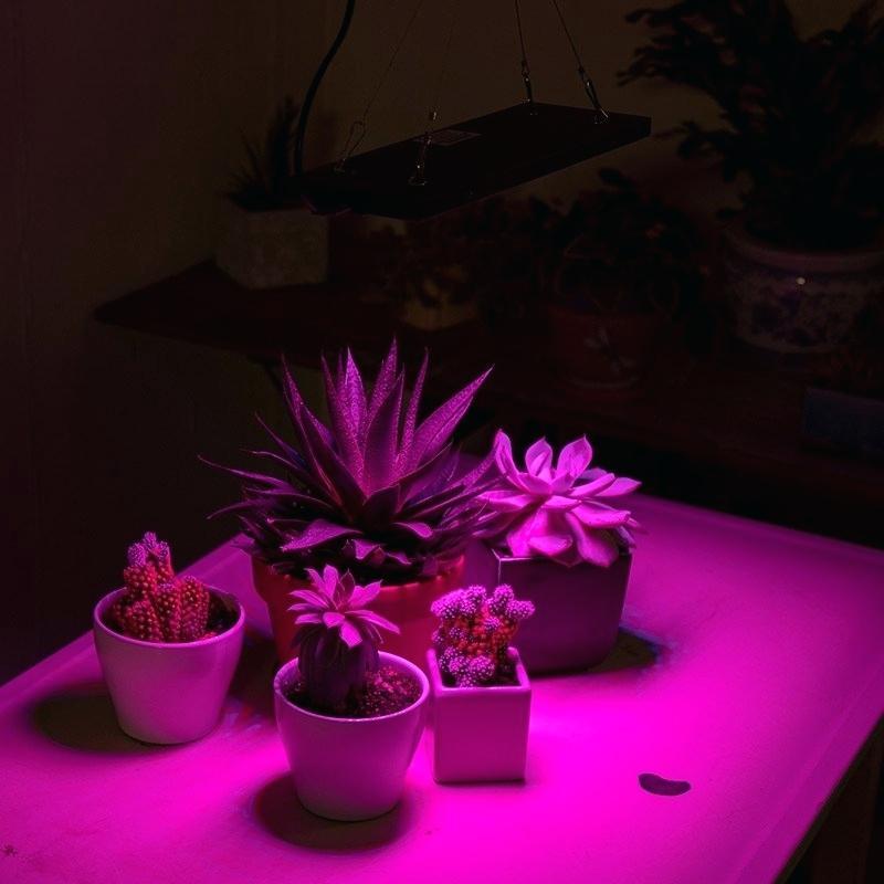 لامپ برای رشد گیاه 8