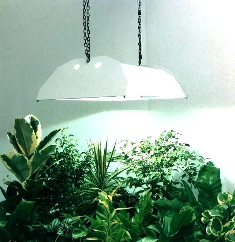 لامپ برای رشد گیاه6