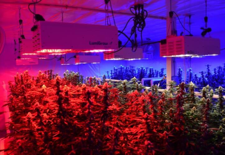 لامپ برای رشد گیاه 5