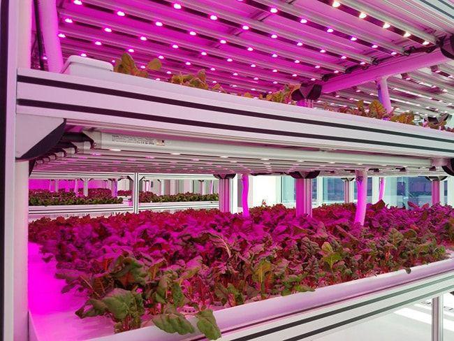 راهنمای انتخاب لامپ رشد گیاه 3