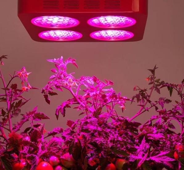 راهنمای انتخاب لامپ رشد گیاه 4
