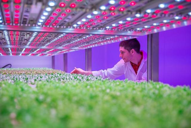 راهنمای انتخاب لامپ رشد گیاه 2