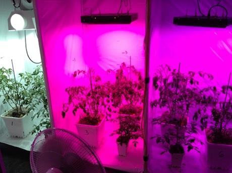 راهنمای انتخاب لامپ رشد گیاه 1