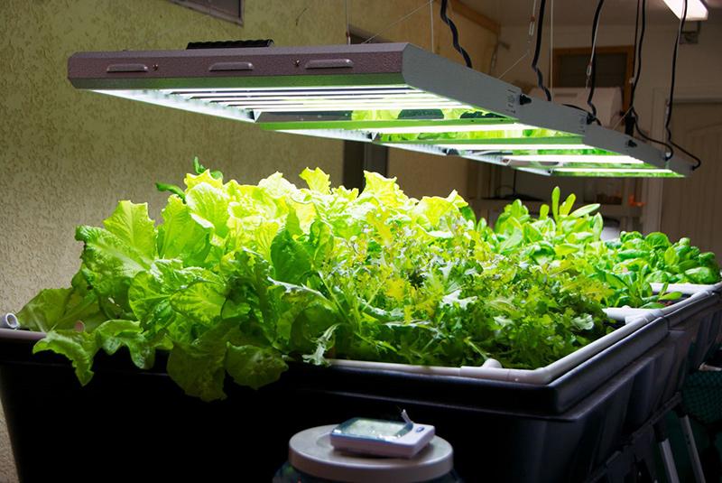 راهنمای انتخاب لامپ رشد گیاه 7