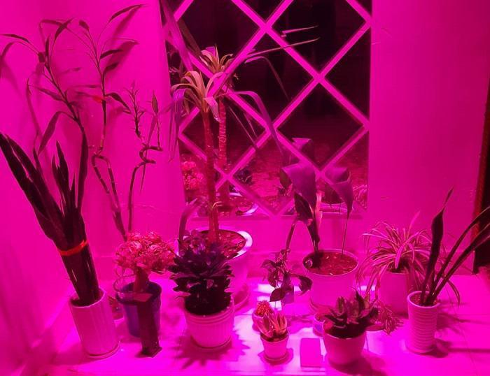 لامپ رشد گیاه خانگی