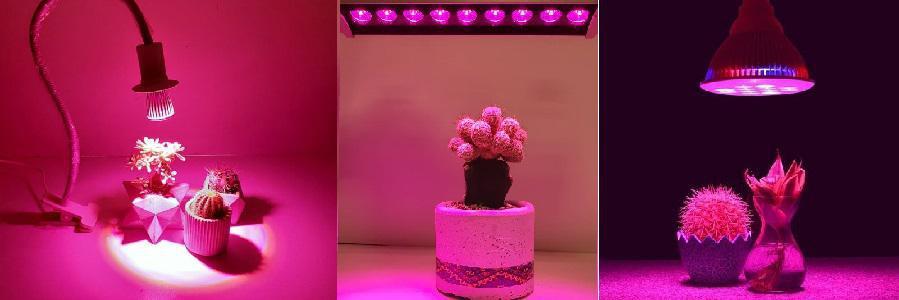 لامپ رشد گیاه برای کاکتوس