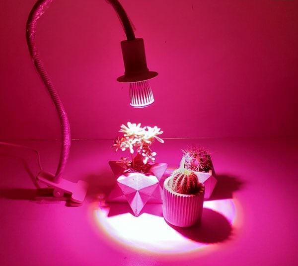 لامپ رشد گیاه رومیزی برای کاکتوس