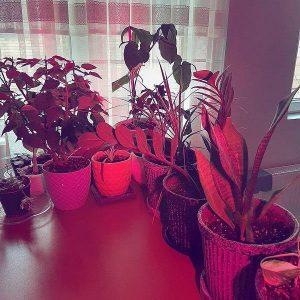 لامپ رشد گیاه 4