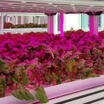 تاثیر نور مصنوعی در رشد گیاه