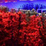 بررسی جامع نور مصنوعی در فتوسنتز و تاثیر آن بر رشد گیاهان